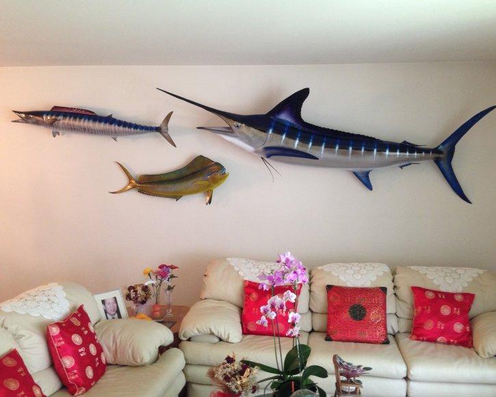 Fishmount trohoy wall from Gray Taxidermy