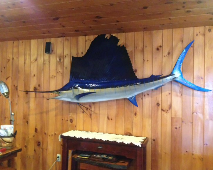 Sailfish on wall from Gray Taxidermy