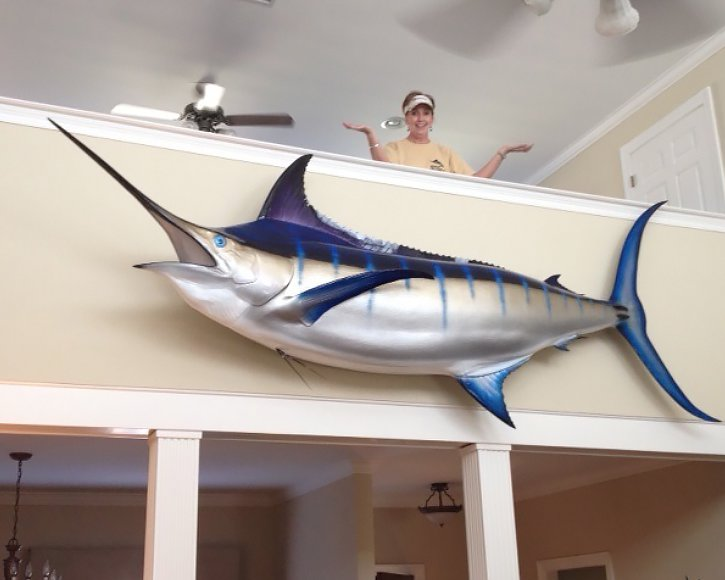 Large Blue Marlin from Gray Taxidermy hanging indoors