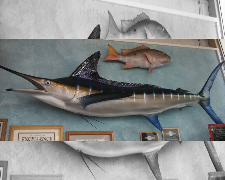 Blue MArlin and Mutton Snapper from Gray Taxidermy