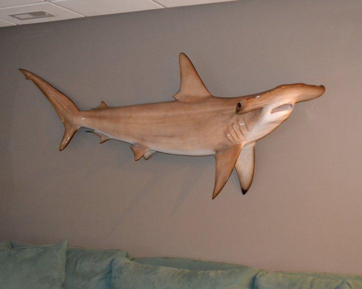 Hammer HEad Shark from Gray Taxidermy