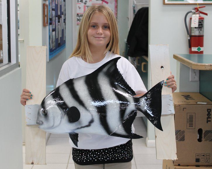 Spadefish from Gray Taxidermy