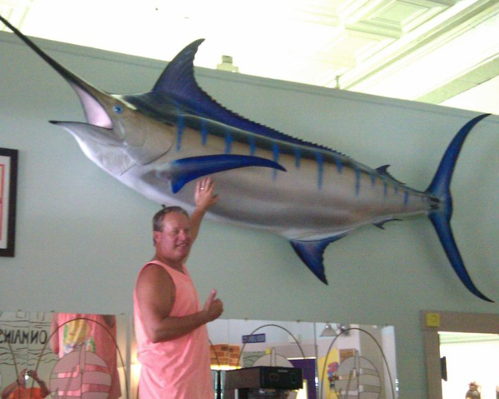 Giant Blue Marlin from Gray Taxidermy