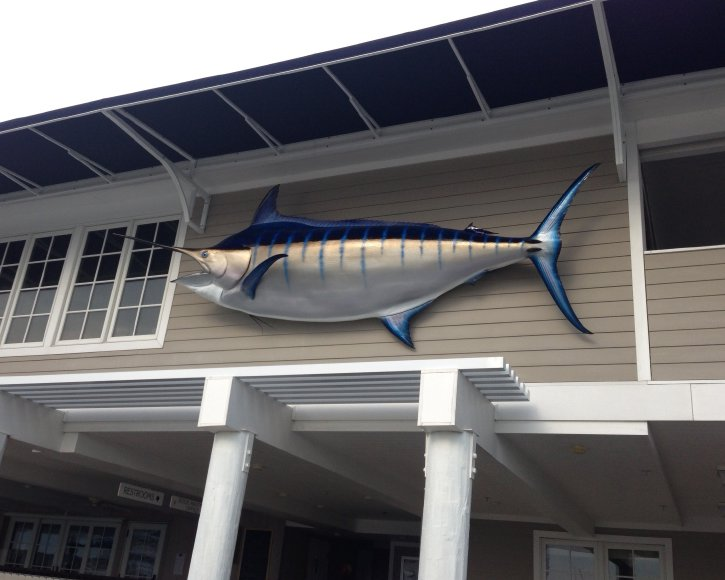 Blue Marlin outside from Gray Taxidermy