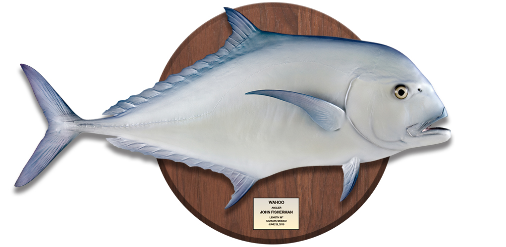 African Pompano on woodplaque