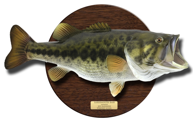 Largemouth Bass on wooden plaque
