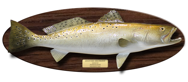 Wood Plaque Fish Mount Action Scene Gallery Mounted Fish