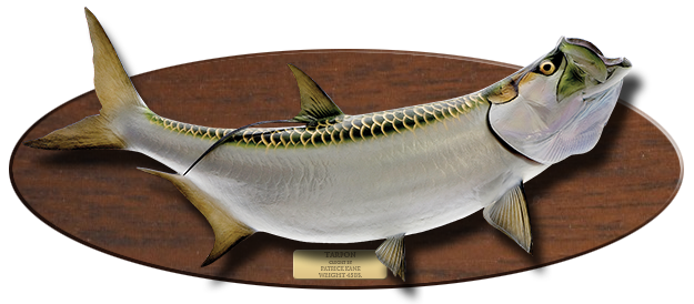 Tarpon Baitfish mount